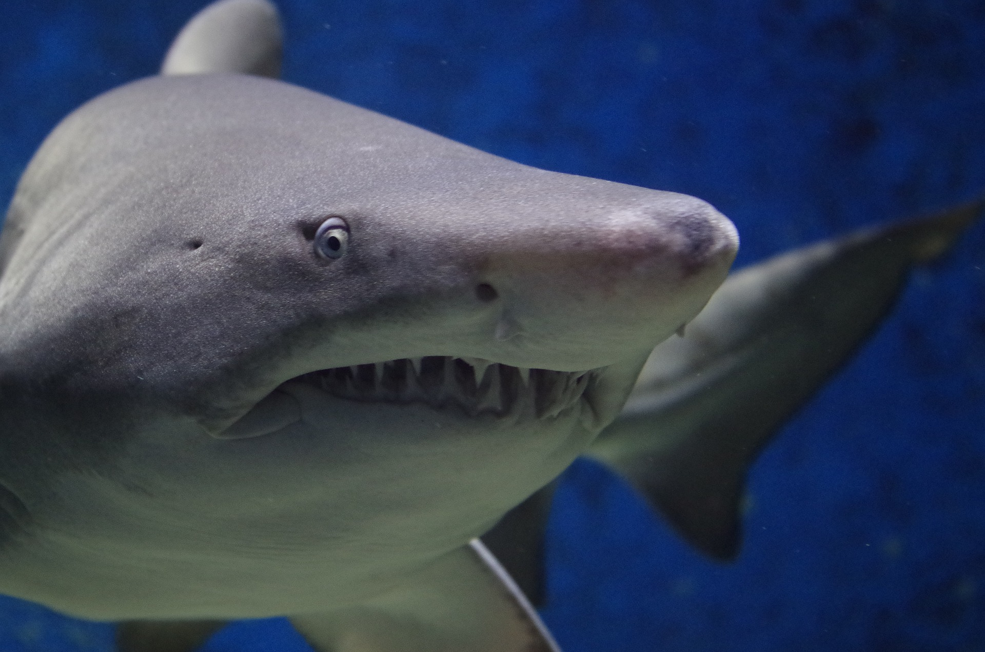 scientists found sharks living in an underwater active volcano