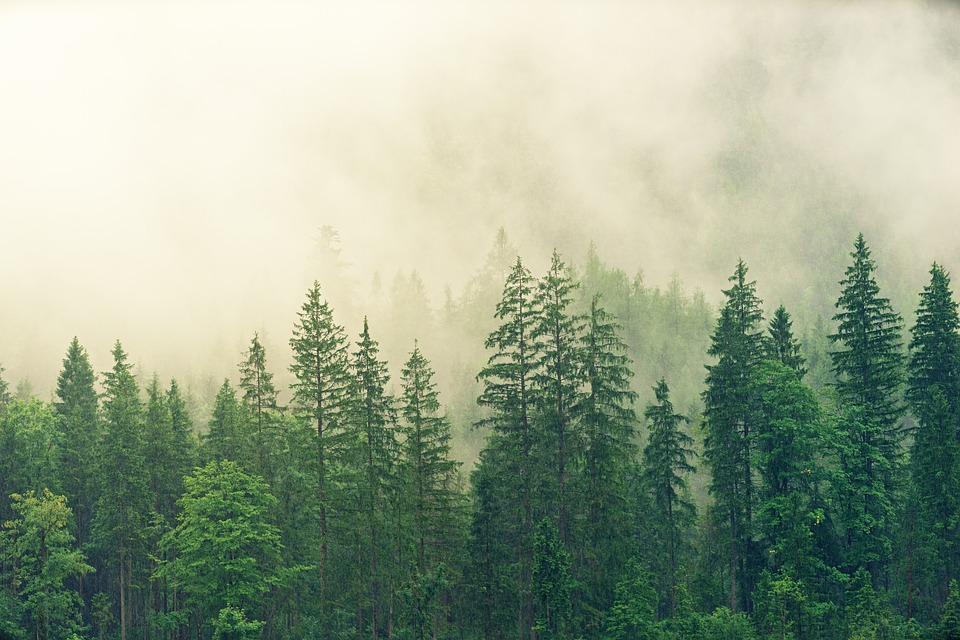 forests of the world are getting destroyed