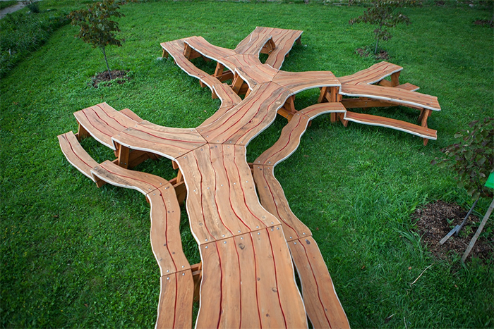 Picture of  a massive branching tree-styled picnic table
