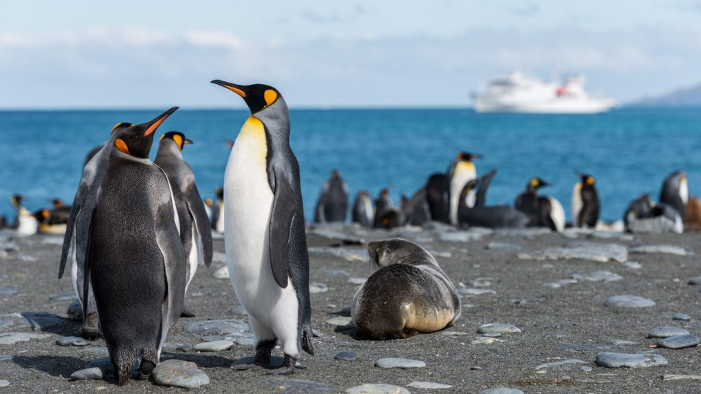 Poop of Penguins Emits EXTREME Amount of LAUGHING GAS, Researchers Find