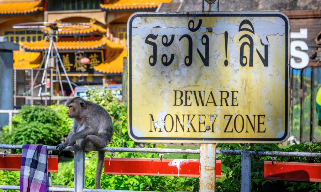 MONKEYS Take Over Thailand's Ancient City