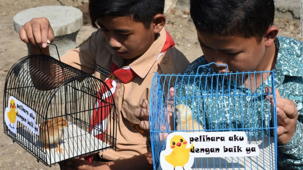 """CHICKENIZATION"" Program in Indonesia Gives Chicks to Kids to Tackle Phone Addiction"