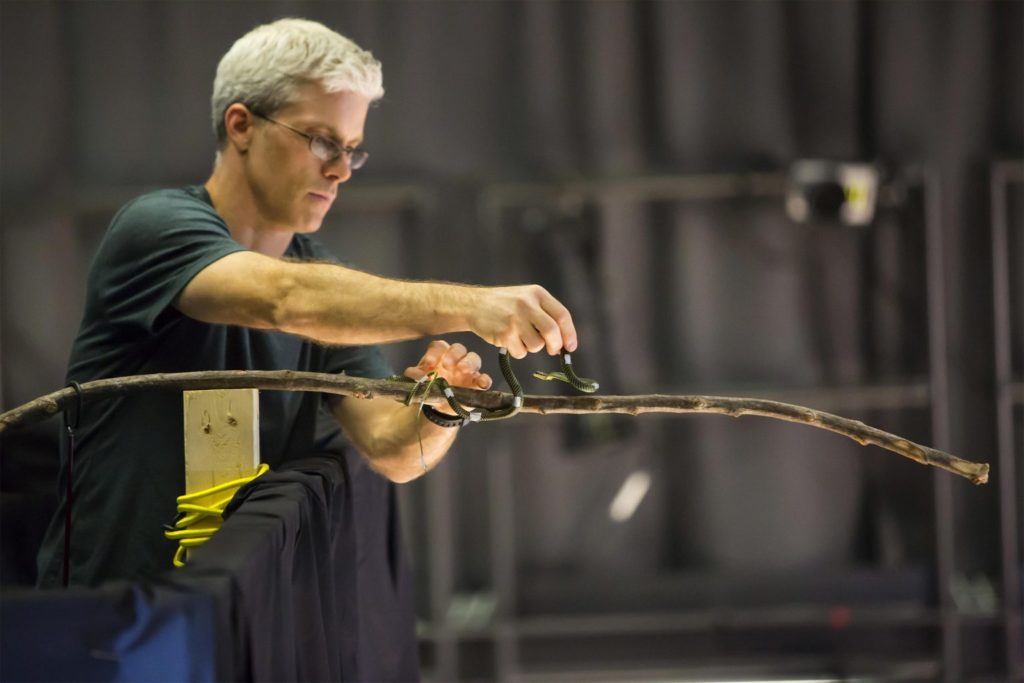 Researchers use 3-D to Capture Movement of Flying SNAKES
