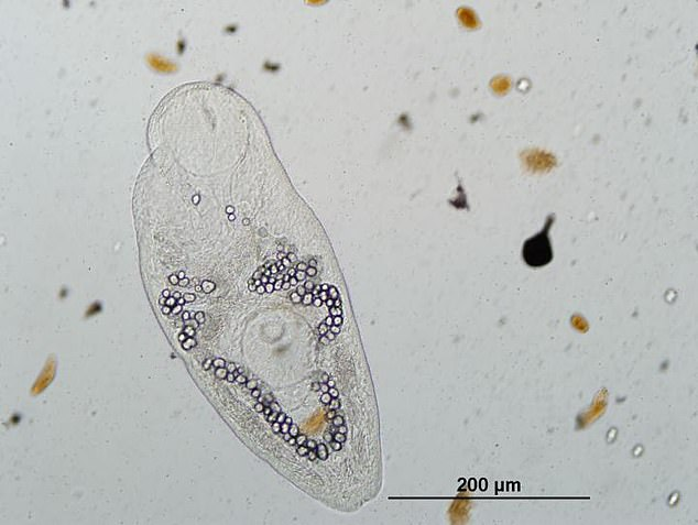 PARASITES Nearing Extinction, Scientists Calling Out for Conservation