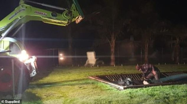 Escaped Cow Gets Stuck Onto TRAMPOLINE of Resident