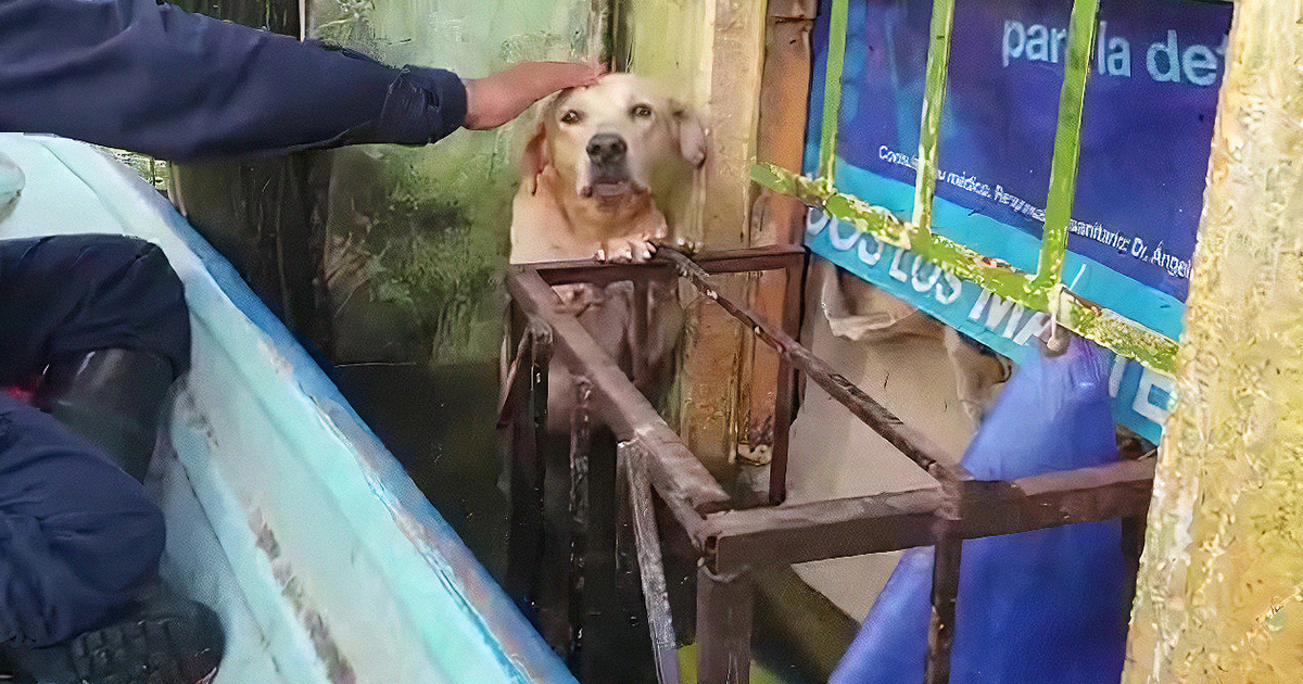 TWITTER Netizens Emotional Over Dog Trapped in Floodwaters
