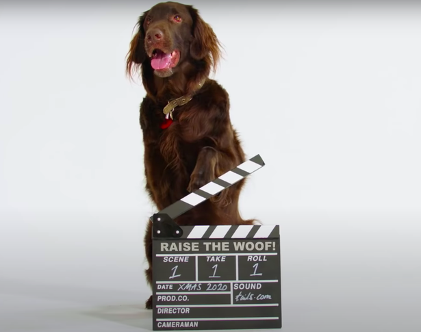 Raise the Woof Unveiled as World's First-Ever Song Made for Dogs