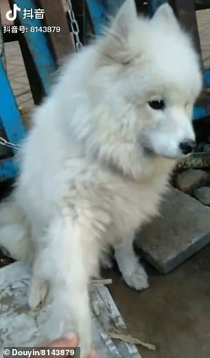 Dog Chained at a Meat Market Asks for a RESCUE by Extending its Paw to a Passerby
