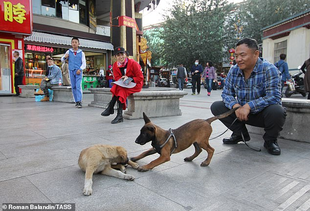 County to Execute the Pet DOGS if Owners Walk Them in Urban Areas