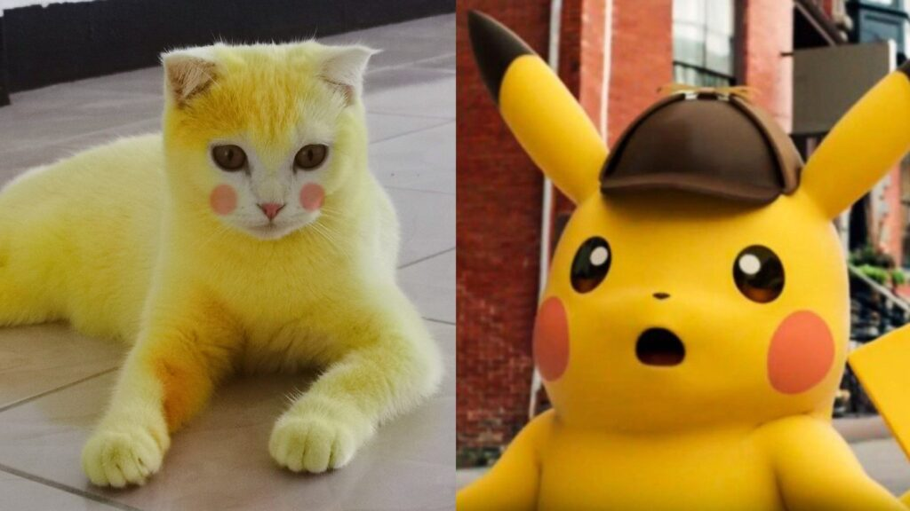 LOOK: Unnamed CAT Becomes a Real-Life Pikachu of Pokemon