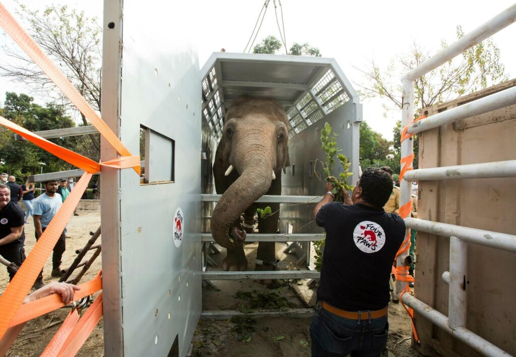 'World's Loneliest ELEPHANT' Gains New 600 Friends Upon Moving to Cambodia