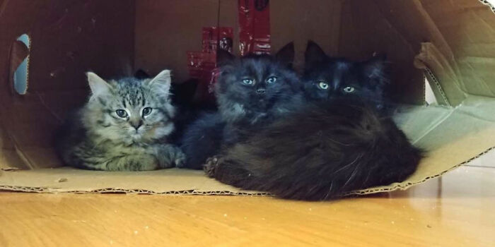 STRAY CAT Brings all Her Babies to Meet the Woman Who Helped Her