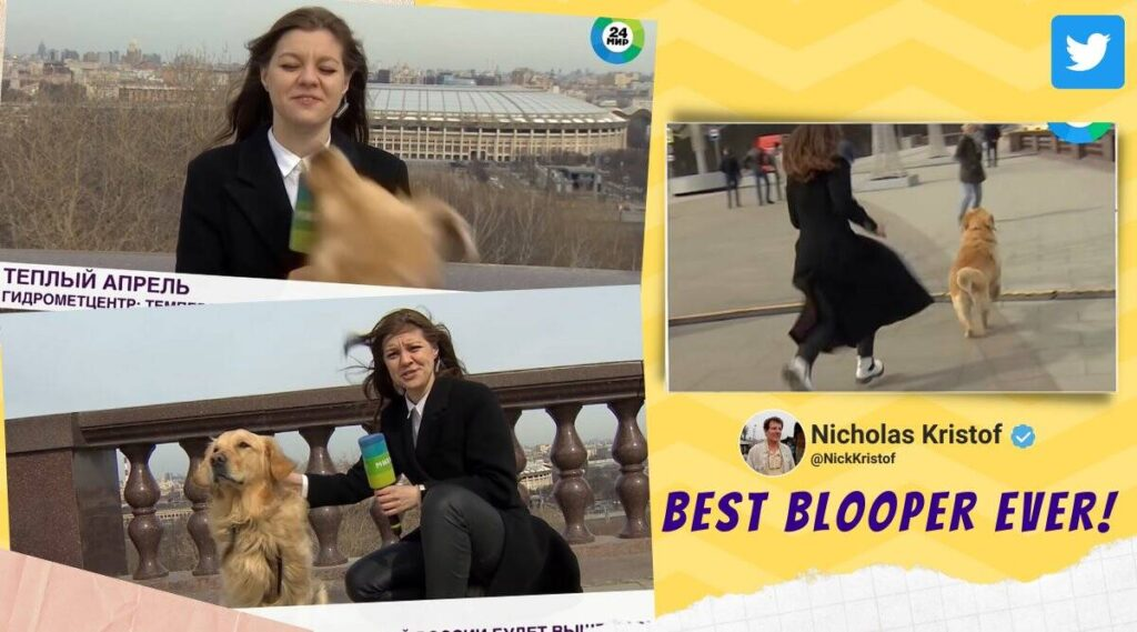 LOOK: Cute Dog Steals Reporter's MIC, Melts Viewers' Hearts