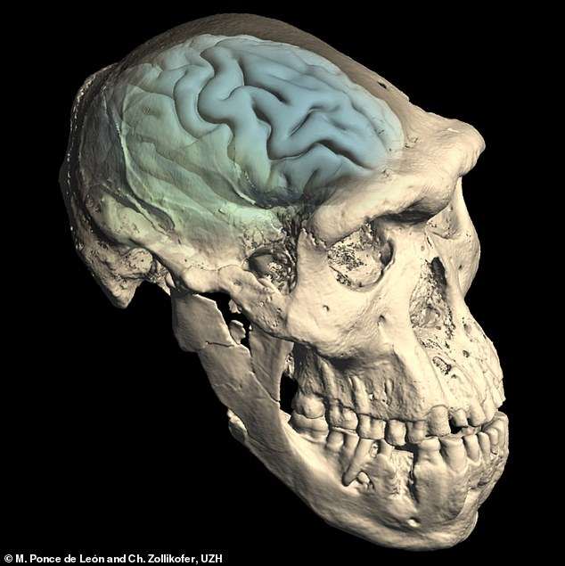 HUMAN BRAINS are 'Relatively Young,' Evolving Only 1.7 Million Years Ago