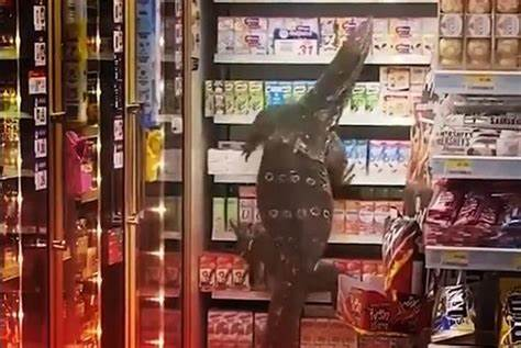 Giant LIZARD Climbs Onto Shelves of Convenience Store