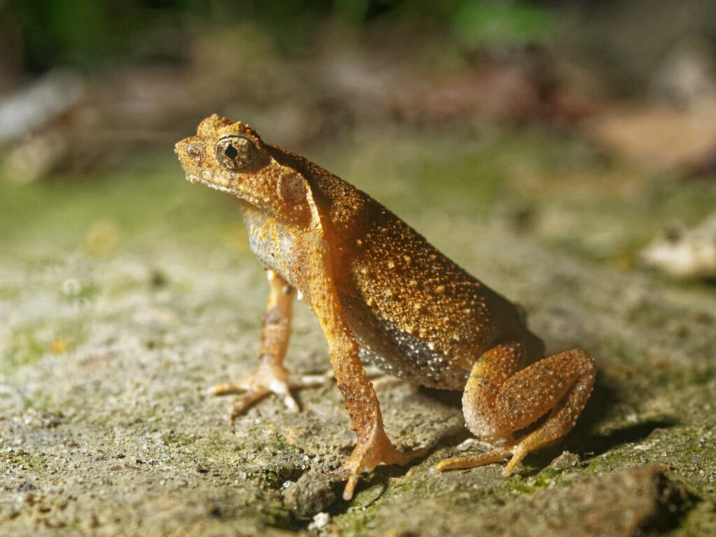Man Caught Fever Not Caused by COVID1-9 but Eating Five Live Frogs to Get 'Stronger'