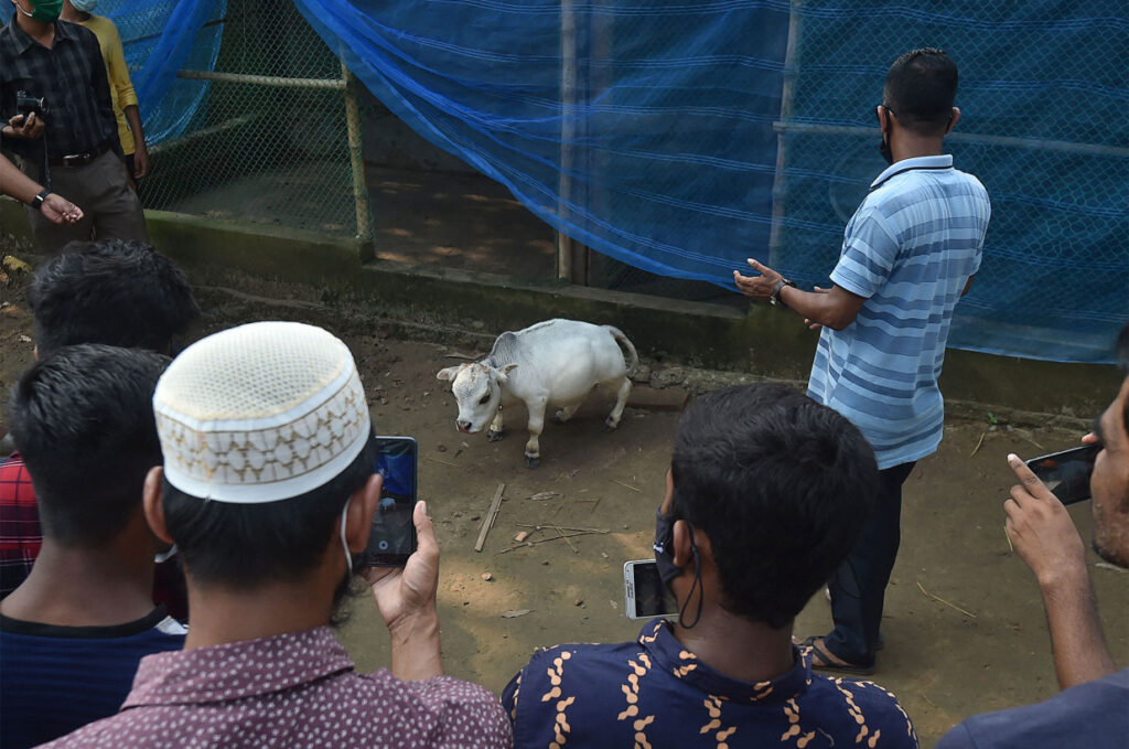 Thousands of Locals Escaped LOCKDOWN Just to see a TINY COW
