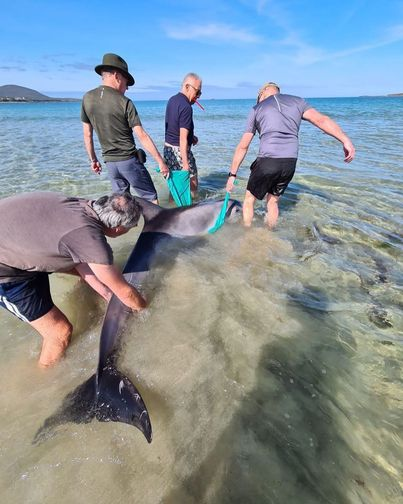 Stranded DOLPHIN Brought Back to Ireland Beach