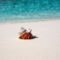 Crab on the white sands